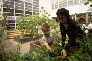Students working in the school garden.